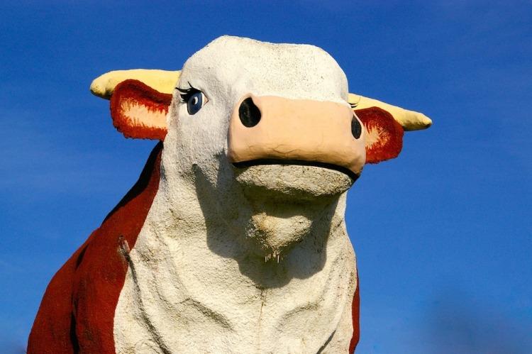 Albert the Bull