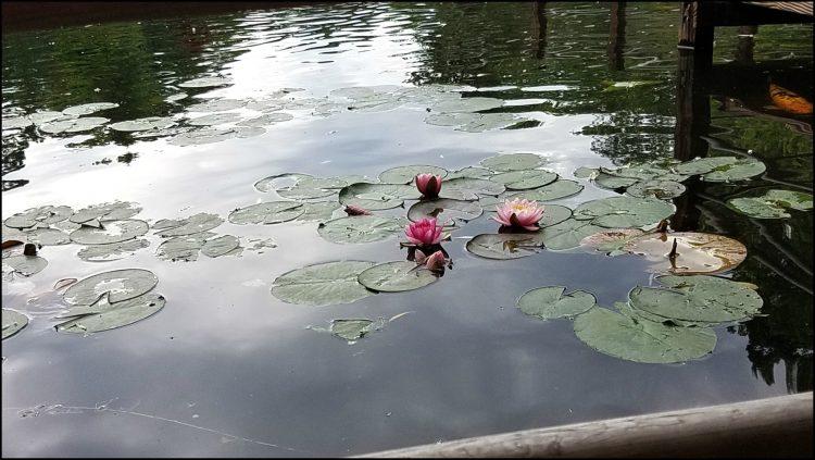garden flowers in lake